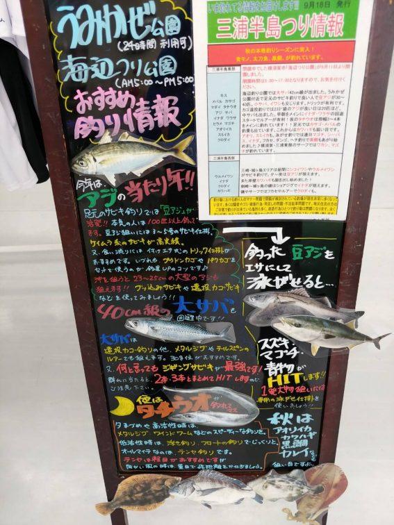 三浦釣り情報